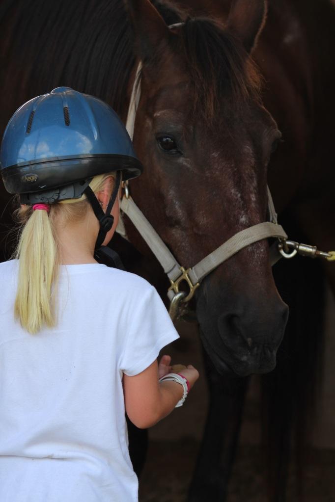 Horse, c